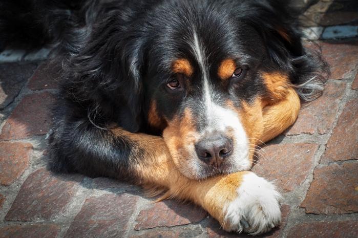 Hundefütterung Erbrechen Durchfall Ibd Futtermittelallergie